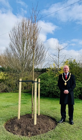 Cllr Bilbie with cherry blossom tree for lockdown anniversary